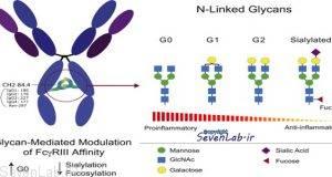 Gamma Globulin G